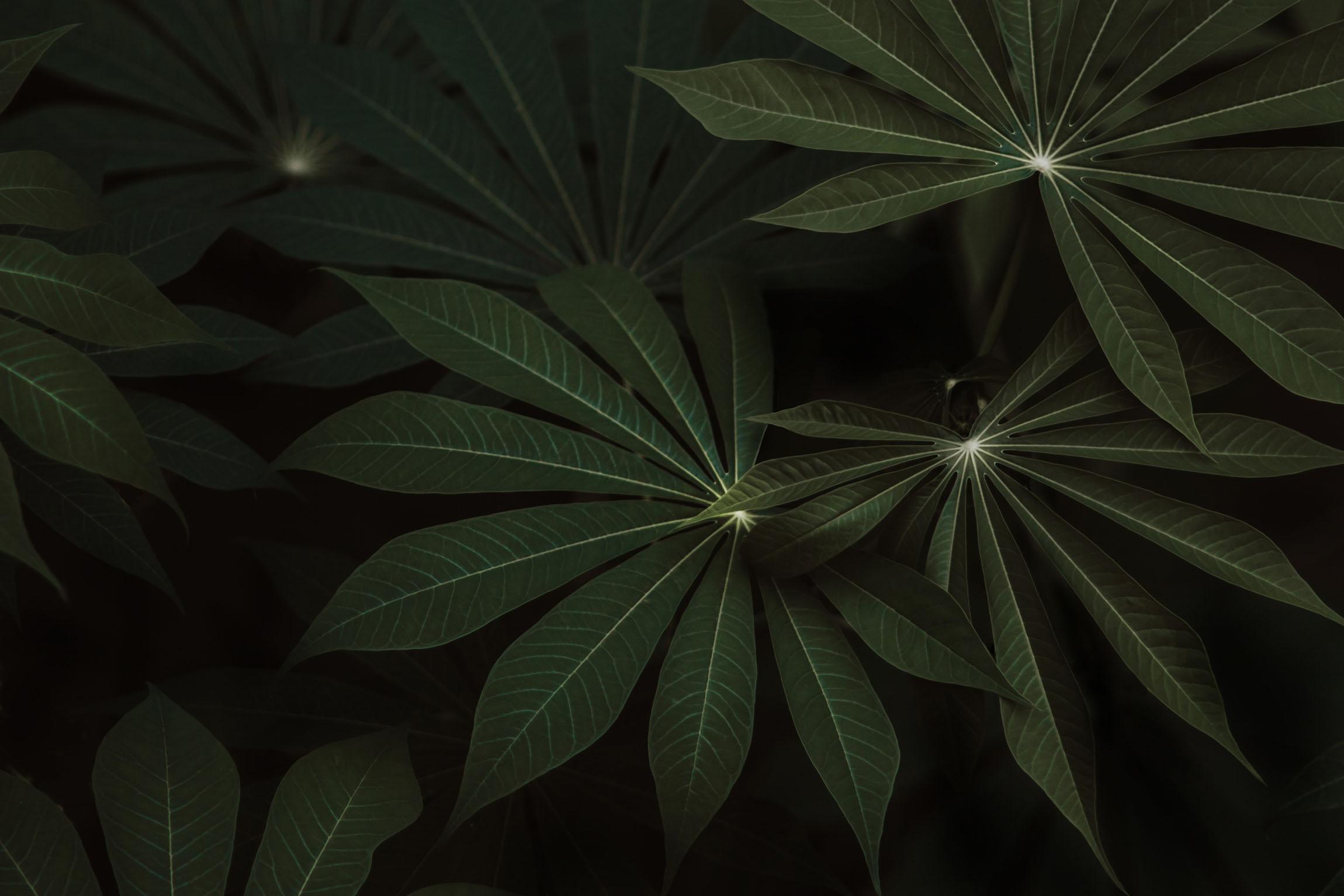 Jungle-Leaves-1